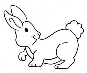 Zompetto il coniglietto