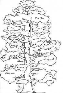 Il pino secolare alla festa degli alberi affi