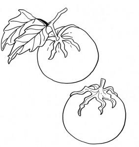 Il pomodoro e la festa degli alberi