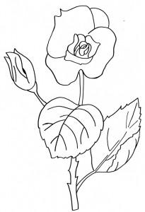 La rosa e la festa degli alberi